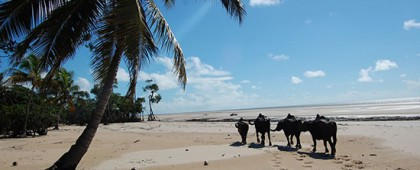 ilha-de-marajo